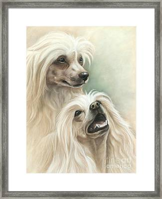 Chinese Crested Framed Print by Tobiasz Stefaniak