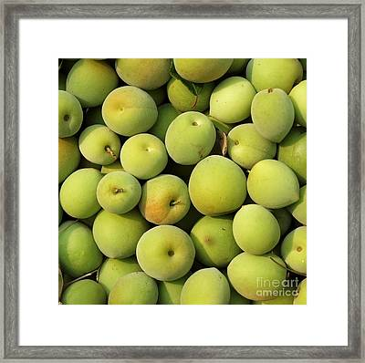 Chinese Green Plums Framed Print by Yali Shi