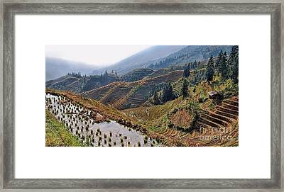 Chinese Rice Terraces Framed Print by Alexandra Jordankova