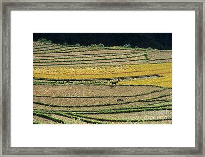Chinese Terraces Framed Print by James Brunker