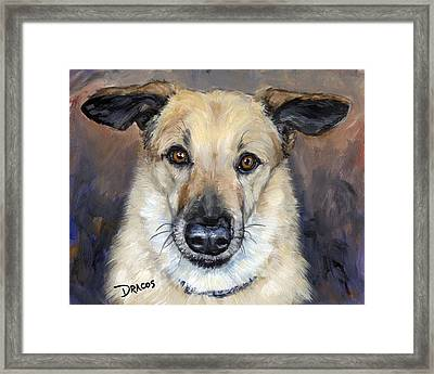 Chinook With Helicoptor Ears Framed Print by Dottie Dracos