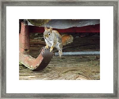 Chipmunk Hitch Hiker Framed Print by Brenda Brown