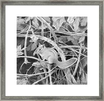 Chipmunk In The Bramble Bushes Framed Print by Suzanne Schaefer