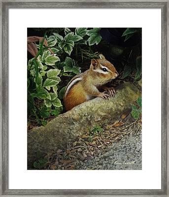 Chipmunk Framed Print by Ken Everett