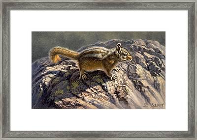 Chippy On The Rocks Framed Print by Paul Krapf