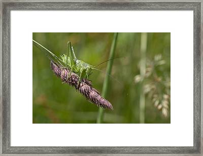 Chirp Framed Print by Marcel Huibers
