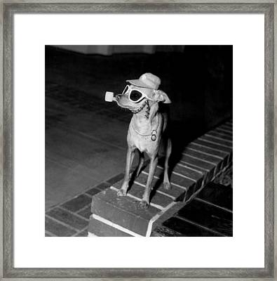 Chiwawa With A Pipe Framed Print by Retro Images Archive