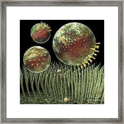Chlamydia Infection, Artwork Framed Print by Russell Kightley