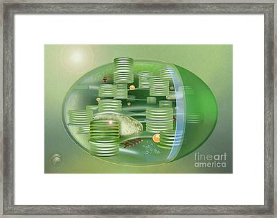 Chloroplast - Basis Of Life - Plant Cell Biology - Chloroplasts Anatomy - Chloroplasts Structure Framed Print by Urft Valley Art