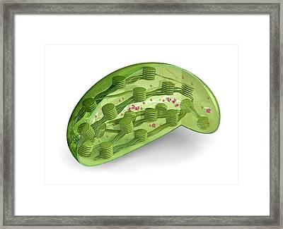Chloroplast Framed Print by Carlos Clarivan