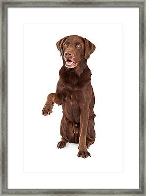 Chocolate Labrador Paw Extended Framed Print by Susan  Schmitz
