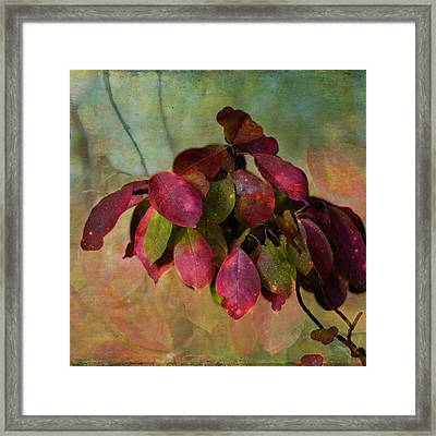 Chokecherry Leaves Framed Print by Shirley Sirois