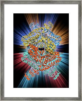 Cholesterol Producing Enzyme Molecule Framed Print by Laguna Design