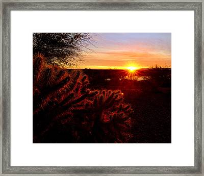 Cholla On Fire Framed Print by Kelly Gibson