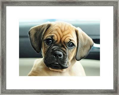 Chooch Framed Print by Lisa Phillips
