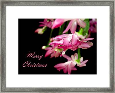 Christmas Cactus Greeting Card Framed Print by Carolyn Marshall