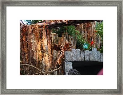 Christmas Display - Us Botanic Garden - 011310 Framed Print by DC Photographer