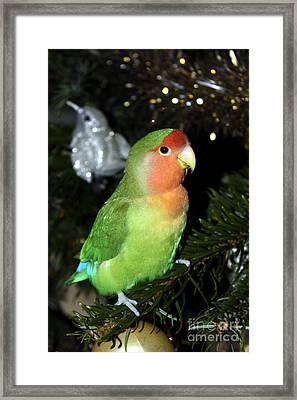 Christmas Pickle Framed Print by Terri Waters