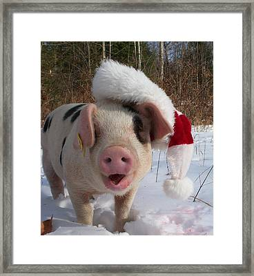Christmas Pig Framed Print by Samantha Howell