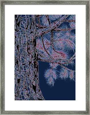 Christmas Pine Framed Print by Andrea Carroll