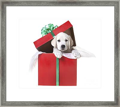 Christmas Puppy Framed Print by Diane Diederich