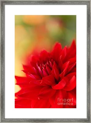 Christmas Red Framed Print by Beve Brown-Clark Photography