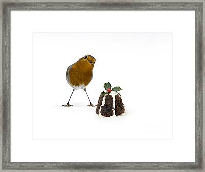 Christmas Robin Framed Print by Tim Gainey