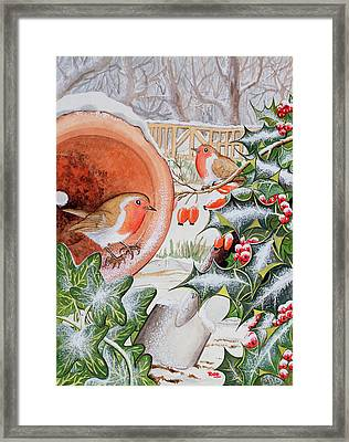 Christmas Robins Framed Print by Tony Todd