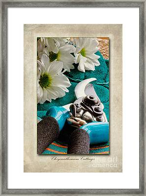 Chrysanthemum Cuttings Framed Print by John Edwards
