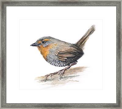 Chucao Tapaculo Watercolor Framed Print by Olga Shvartsur