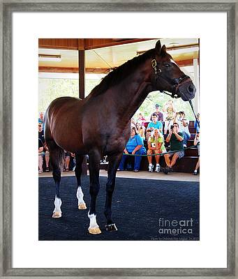 Cigar A Legendary Horse Framed Print by Deborah Fay