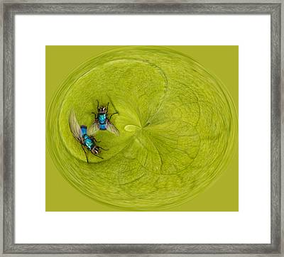 Circle Of Flies Framed Print by Jean Noren