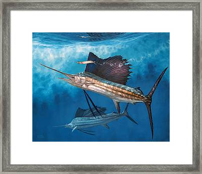 Circling The Bait Framed Print by Don  Ray