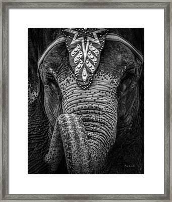 Circus Elephant Framed Print by Bob Orsillo