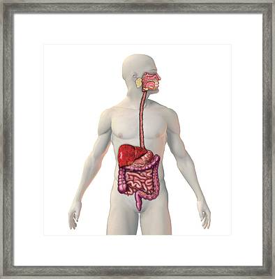 Cirrhosis Of The Liver Framed Print by Carol & Mike Werner