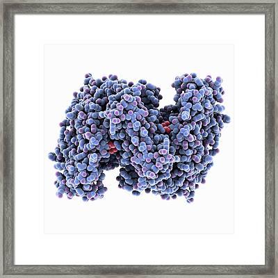 Citrate Synthase Molecule Framed Print by Laguna Design