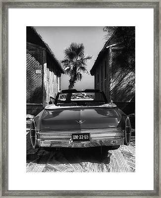 Classic In The Tropics Framed Print by Mountain Dreams