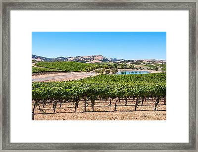 Classic Napa - Cuvaison Winery And Vineyard In Napa Valley. Framed Print by Jamie Pham