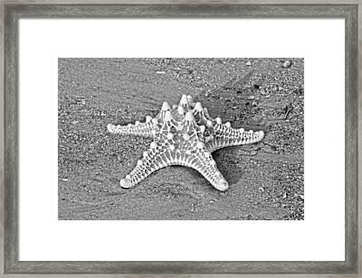 Classy Asteroidea Framed Print by Betsy C Knapp