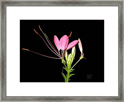 Cleome Framed Print by J R Baldini Master Photographer