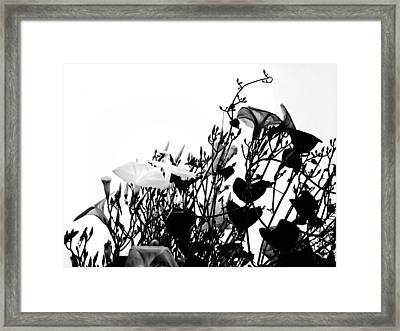 Climbing Forever Framed Print by Camille Lopez