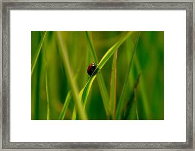 Climbing Up The Long Green Road Framed Print by Jeff Swan