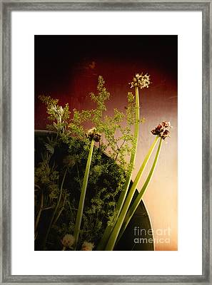 Clipped Stems Framed Print by Margie Hurwich