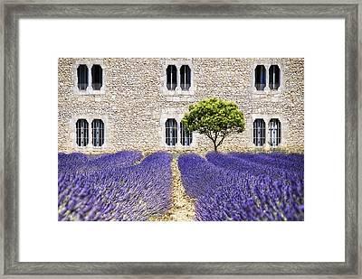 Cloister-lavender Framed Print by Joachim G Pinkawa