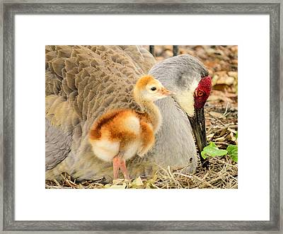 Close To Mother Framed Print by Zina Stromberg