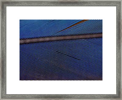 Close Up Macaw Feather Structural Colour Framed Print by Paul D Stewart