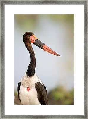 Close-up Of A Saddle Billed Stork Framed Print by Panoramic Images