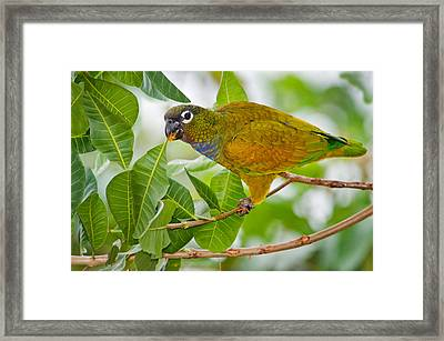 Close-up Of A Scaly-headed Parrot Framed Print by Panoramic Images