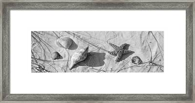 Close-up Of A Starfish And Seashells Framed Print by Panoramic Images