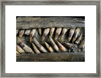 Close Up Of Ichthyosaur Snout Framed Print by Science Photo Library